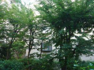爽やかな季節に こんばんわぁ~ヾ(´▽`)ノ゛  前回のカキコ後に、大雨による被害がありました。 今日も
