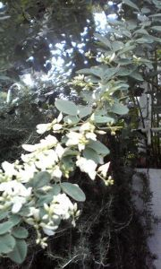 まい ふぇぼれっと すいんぐ 白萩 お洗濯物干し日和ですと天気予報で言ってた。久し振りに聞くこの言葉。 しかし ここ九州では外干し