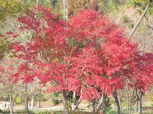 ☆還暦クラブ☆ 何時の間にか 季節は冬ですね 今朝も寒い朝です短かった秋を・・・・・・