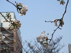 ぶらり旅 きまま旅♪ ほんまに絵を描いた様に 暖かい日が続いています  この前行って来た高知の桜は もう二分咲って言う所で