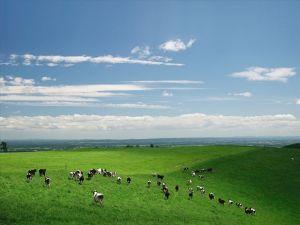 998407 - 日経平均株価 【シドニー時事】オーストラリアで世界最大の牧場を含む複数の牧場が売りに出さ  れる。総面積は11万平
