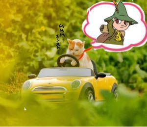 虎太郎vsクロムマセラのスレ 🦛〜〜🐟        🐈🐾🐾🐈🐾🐾
