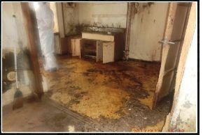 猫の糞尿被害者の会 猫多頭飼い異常者の住居内の模様