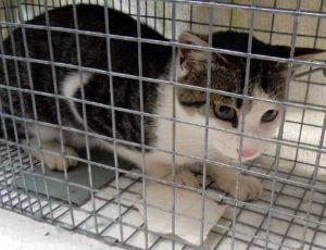 猫の糞尿被害者の会 害獣と化した猫の駆除運動が活発ですな