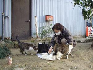 猫の糞尿被害者の会 猫被害に遭ったら 捕獲器を導入しよう   こんな悪党もいるそうです