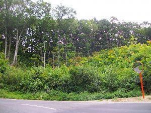 春の山菜が待ち遠しい、秋のキノコも。  (サクラシメジ)    http://remi2.web.fc2.com/citron/9_9.h