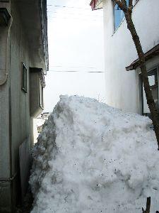 春の山菜が待ち遠しい、秋のキノコも。 .  まだ、残っている雪。 でも、雪は、大分、少なくなった。 .