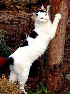 漢字でしりとり 命名  ウチのネコちゃん、いつも走り回っているので ランと名付けました^^;