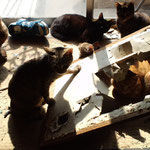 猫の祟り ケダモノ多頭飼い大悪党の  生涯は  惨めなもの  ですね
