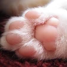 猫の祟り 猫の肉球   ピンクでプヨプヨ 気持いいね。