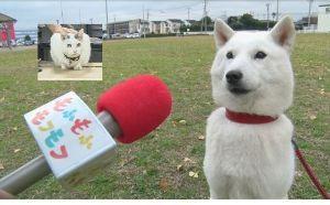 猫の祟り 1月13日土曜日 NHK 午後8時15分~午後8時45分 もふもふモフモフ  ネコちゃんもワンちゃん