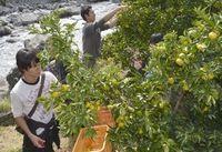 一枚の写真の思い出~。 棚田で育った農作物を収穫するイベント「オープンファーム」が19日、上勝町旭の田野々地区で開かれ、一般