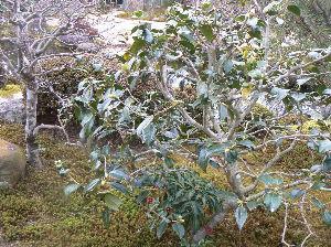 旅 暮らし なんでもお話ししませんか。 寒桜   とても綺麗でした。  寒かったのですが、とても心が癒されました。