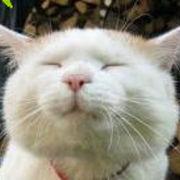 阪神、わいわいがやがや ^^v