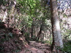 書きたい時に 子供の頃チャンバラをして走り回ったり。  20歳のころ、大阪から帰省して、父母と登ったり。  自分の