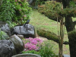 中高年の井戸端会議     ~~朝から☂雨 ・・・・・ 明日からは晴れそう~~         朝起きたら~~ ネコも起
