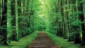どこかの森 こんばんは 素敵な出会いがあり、私を受け入れてくれた森。 この先には、仲間がいる。 楽しかったなぁ