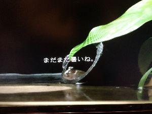 4579 - ラクオリア創薬(株) ラク板の調子はどうかなぁ〜〜(๑・̑◡・̑๑)〜〜