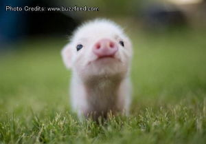 4579 - ラクオリア創薬(株) チャーハンは盛癌の飼い豚だったのか…、成程ね~♪