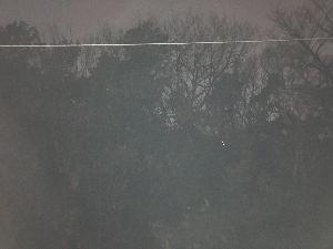 4579 - ラクオリア創薬(株) ならのきは大木だよう(゚o゚;; 写っているのは電線