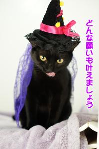 禅 沖田は東京ドームの巨人戦で始球式やったんにゃって。あはは。\(・○・)/   >40歳以上の人