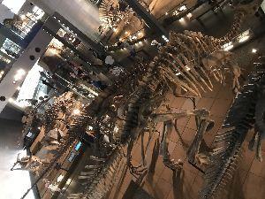 行って来たよ~♪ 恐竜博物館  ここは 一見の価値あり