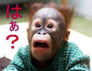モルフォが二万円になるまでのスレッド エライザちゃんの写真貼ると消されちゃうやないかい😿 社長に通報されてるんやろな多分🐙  アールさんは