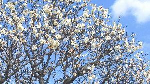 なんとなく、なんとなく        梅の花 名前がいいですね      月の桂 楊貴妃 紅千鳥       寒紅梅 紅鶴
