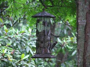 道南の野鳥だより 角度を変えたものを一枚。