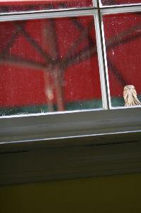 道南の野鳥だより そこで急いで洗濯室へ行き中から写したのがこれです。