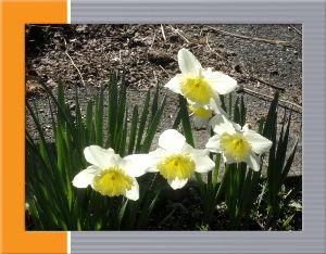 空いてる場所でのんびりしたい・・・・ 咲き程まで降り続いてた小雨が上がりましたね・・・  西の方から明るくなってきました・・・  庭の花に