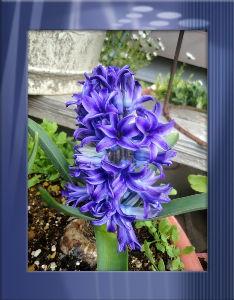 空いてる場所でのんびりしたい・・・・ 気温上がらず小寒い一日・・・・  家内と墓参りに・・・  周りは新しい花が並んで綺麗・・・・  ヒヤ
