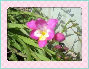 空いてる場所でのんびりしたい・・・・ セータ不要な程の暖かな日和に・・・  庭の花も賑やかになり明るいね・・・  フリージャーもいよいよだ