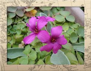 空いてる場所でのんびりしたい・・・・ 雨音も聞こえない程静かな小雨が降り続いてます・・・・  庭の花には恵みの雨になりそう・・・  鳥たち