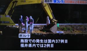 1380 - (株)秋川牧園 豚コレラ ニュースでやってました🐖