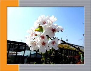 暇人の日記帳にしよう・・・・ 連日初夏の陽気が続いて汗ばむほど・・・  庭の花も多彩になり季節に反応して賑やか・・・  新たに増え