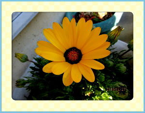 暇人の日記帳にしよう・・・・ いよいよ春の訪れを感じる小春日和・・・  陽射しが強いので気温も上がりポカポカ陽気に・・・  庭の花