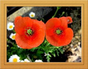 暇人の日記帳にしよう・・・・ 爽やかな風吹く初夏の陽気に・・・  空には燕が飛び交い季節を感じますね・・・  庭の花も入れ替わり初