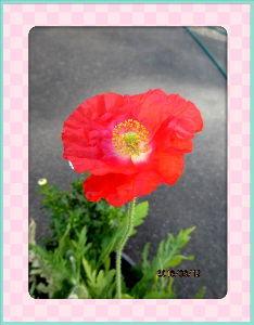 暇人の日記帳にしよう・・・・ 今日はポカポカ陽気の暖かな日和・・・  陽射しが強くて動けば汗ばむほど・・・  庭の花も元気に咲き出