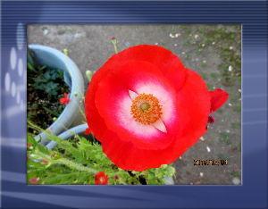 暇人の日記帳にしよう・・・・ 今朝は異常なほど風が冷たい・・・  日中も気温がさほど上がらず小寒い感じ・・・  庭の花には影響なく