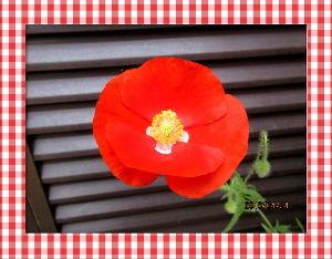 暇人の日記帳にしよう・・・・ 朝から不安定な天気でいよいよ降りだしそうだね・・・  陽射しが無くても庭の花は元気に咲き庭は賑やか・