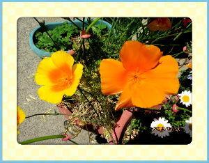 暇人の日記帳にしよう・・・・ 爽やかな風が吹き抜けて初夏の陽気に・・・  庭の花も陽射しに誘われて沢山開花・・・  空いてるプラン