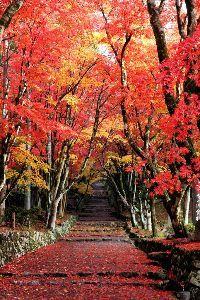 5406 - (株)神戸製鋼所 鶏足寺の紅葉が見頃を迎えつつある・・・  五平餅食べながらあったかいお茶をすする☕  北近江の湯から