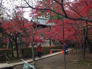 海とお酒と旅と人間の好きな人集まれ! 今日は皆さん。 昨日妻とカラオケ、バスツワーで埼玉県の平林寺(金鳳山 平林禅寺)と高尾山の紅葉を見て