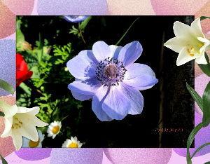 暇潰しが仕事に・・・・・・ 陽射しも強く気温も高いが心地よい風が吹く初夏の日和・・・  庭の花も今朝は咲くのが早く賑やかで綺麗・