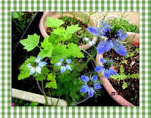 暇潰しが仕事に・・・・・・ 午後から暑さ厳しい夏日に・・・  陽射しが強いので乾燥気味になり庭の花には  給水をいつもより少々余