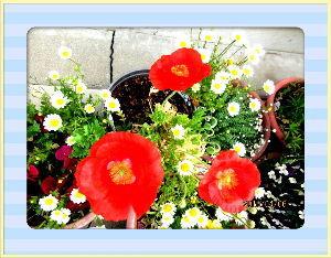 暇潰しが仕事に・・・・・・ 先ほどから雨足が賑やかになってきたようだね・・・  久しぶりの雨で庭の花も喜びそう・・・  午前中に