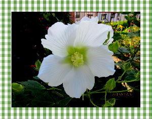 暇潰しが仕事に・・・・・・ 陽射しがあっても爽やかな秋の日和・・・  やはり心地よい風が庭を吹き抜けて  涼しさを感じて気分爽快