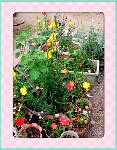暇潰しが仕事に・・・・・・ 不安定な天気になったね・・・  何時降り出すか解らないほどの天気・・・  庭の花も一休みで開かないよ
