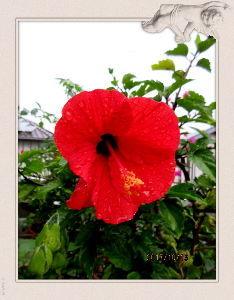 暇潰しが仕事に・・・・・・ 朝から小雨模様で小寒い日和に・・・  出かける予定もないのでPCでお遊び・・・  小雨の中で撮った庭